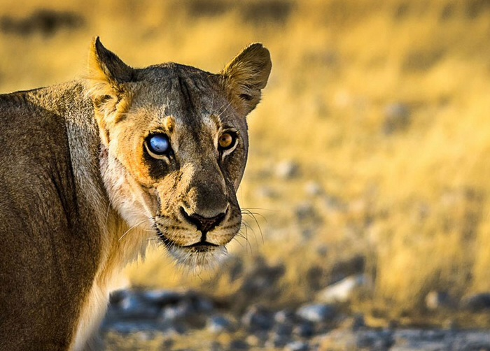 عکس حيوانات زيبا